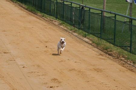 Hunderennbahn